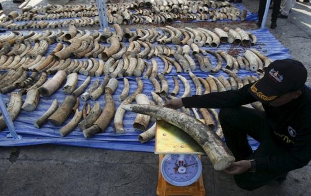 У Таїланді вилучили рекордну партію контрабандної слонової кістки