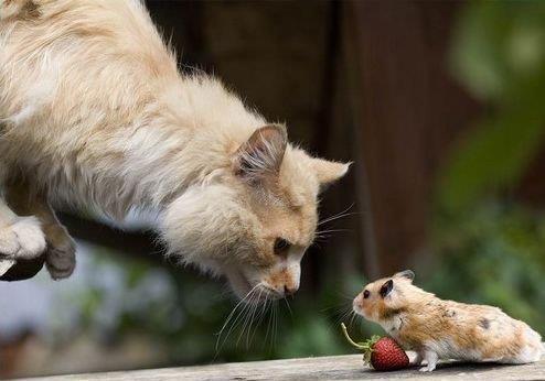 Том и Джери в реальной жизни) Кошка играется с мышкой!