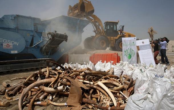Президенты Чада и Конго сожгли пять тонн слоновой кости