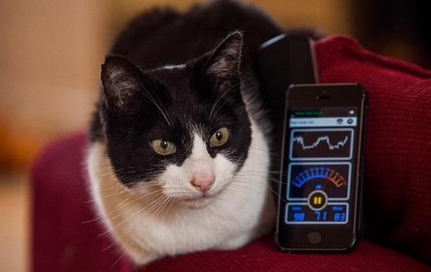 Британська кішка Мерлін встановила рекорд Гіннесса за гучністю муркотіння