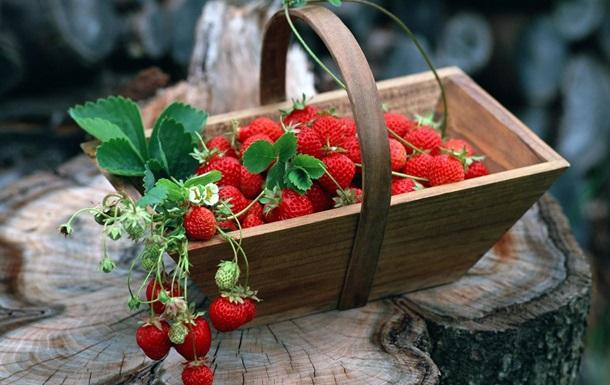В Японии вырастили самую тяжелую в мире ягоду земляники