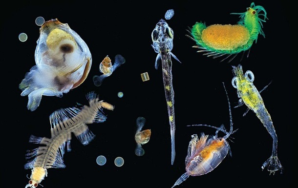 Океанологи знайшли десятки тисяч невідомих живих організмів