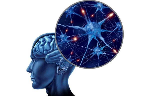 Возрастное слабоумие возникает из-за уникальных способностей мозга - ученые