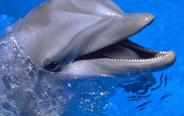 Дельфины и подковы. На что выделяет Украина деньги для армии