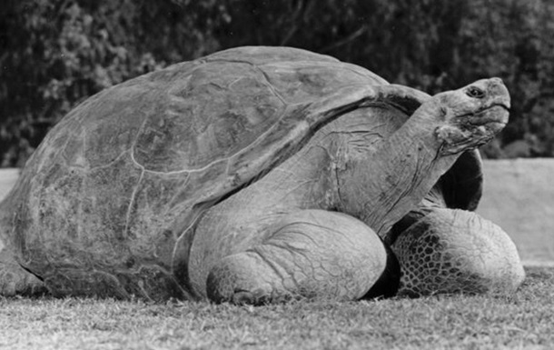 В зоопарке Сан-Диего усыпили 150-летнюю галапагосскую черепаху