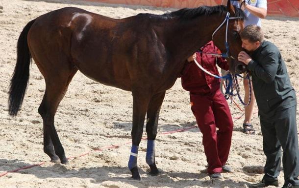В Чехии под санкции попали лошади Кадырова