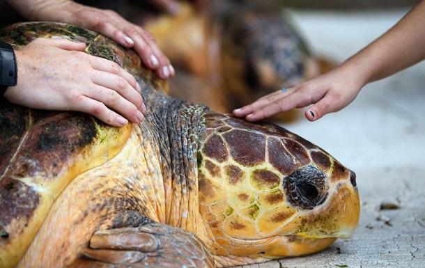 Археологи нашли останки предка современных черепах