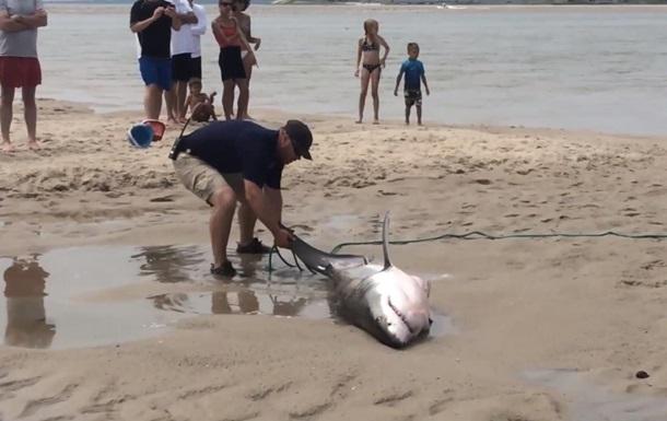 Отдыхающие пляжа не побоялись акулы и дотащили ее до воды: видеохит