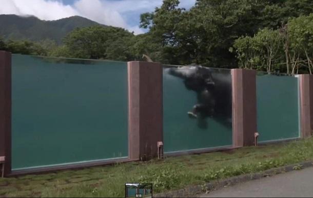 В Японии построили прозрачный бассейн для слонов