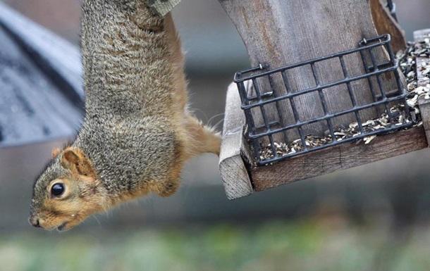 П яна білка влаштувала погром в одному з приватних лондонських клубів