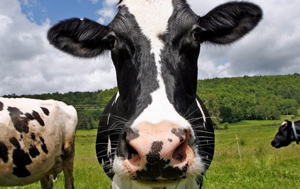 В Швейцарии военные помогут коровам спастись от жары