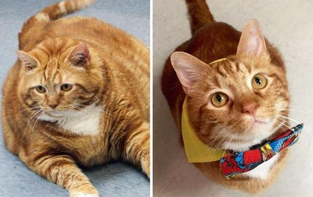 Толстый кот по кличке Тощий похудел на десять килограммов