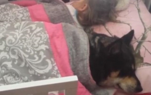 Видеохит. Пользователей сети умилил спящий в детской кровати пес