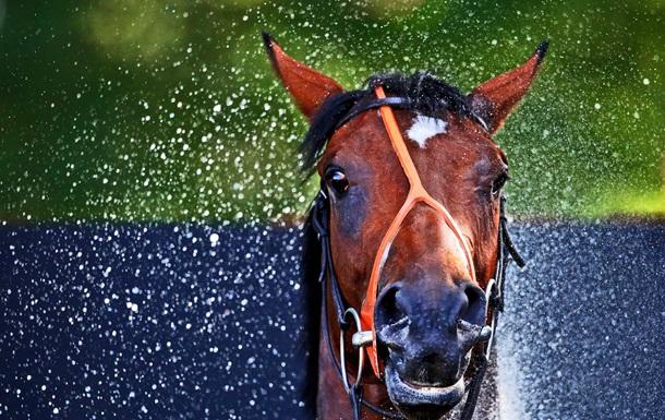 Ученые обнаружили у лошадей 17  выражений морды