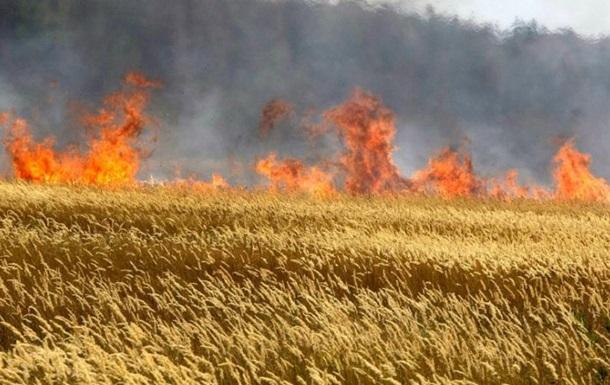 Из-за поджога во Львовской области сгорели 15 гектаров пшеницы
