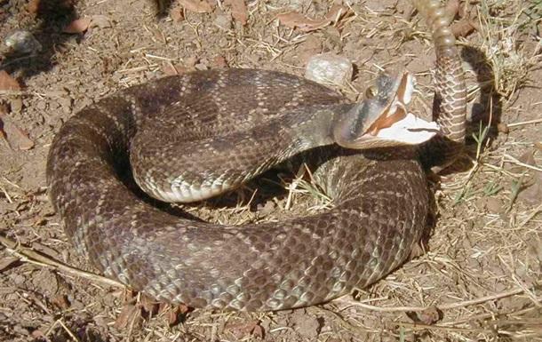 Американец может потерять руку после селфи с гремучей змеей
