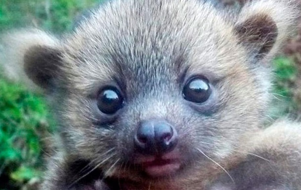 Научный флешмоб. Биологи выбирают самое милое животное в Twitter