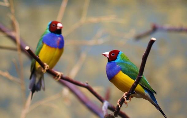 Птицы строят семьи по любви – ученые