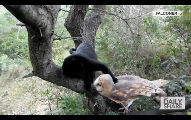 Ролик о дружбе гиперактивной кошки и  серьезной  совы стал хитом в Сети