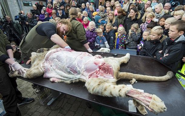 В датском зоопарке расчленили льва