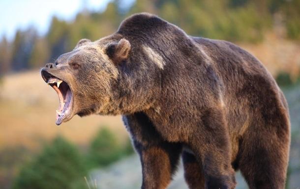 Во Флориде впервые за 20 лет разрешили охоту на медведей