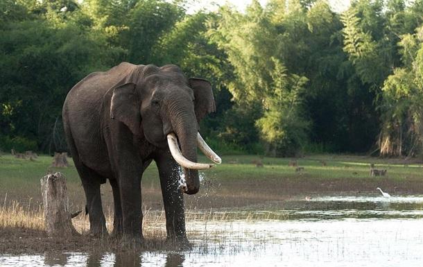 Дикий слон затоптал двоих рабочих плантации
