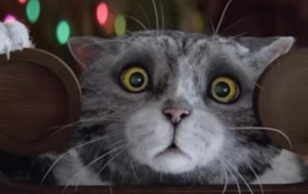 Видео с милым рождественским котом за два дня собрало 3 млн просмотров