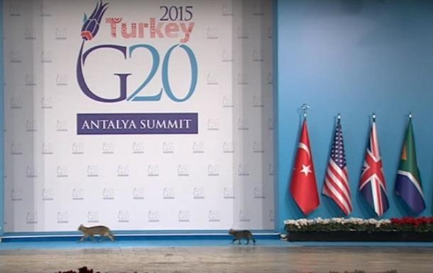 По стопам лидеров. Коты пробрались на G20