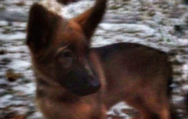 Россия в знак солидарности подарила Франции щенка