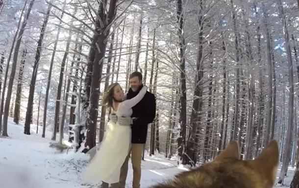 Снятое собакой свадебное видео стало хитом YouTube