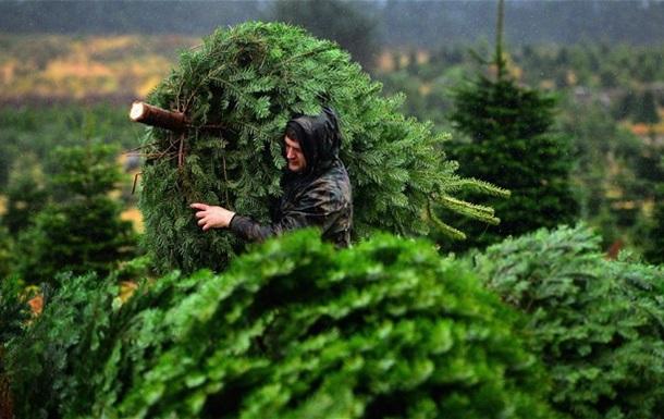 В США похитили два трейлера с рождественскими елями