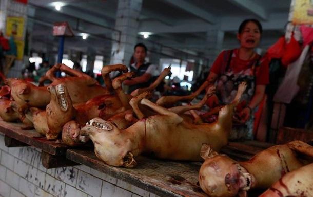 Фестиваль собачьего мяса в КНР - живодерство или дань традициям?