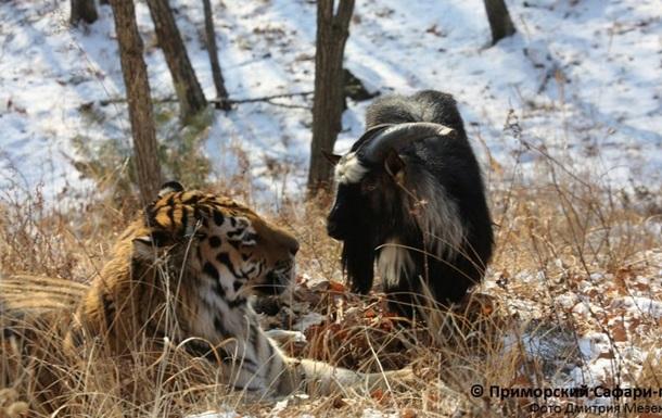 Эксперт объяснил феномен дружбы Тимура и Амура