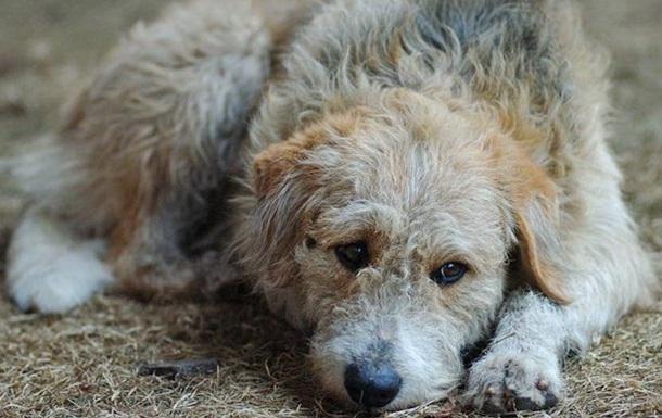 В полиции рассказали о спасшей девушку бездомной собаке