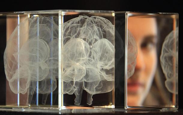 структура мозга человека