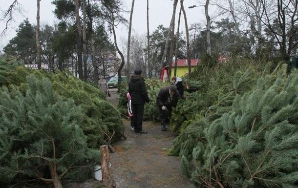 Украинцам предлагают новогодние елки и сосны в ящиках