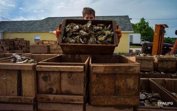 Во Франции похитили три тонны устриц