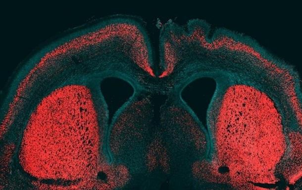 Ученые впервые проследили работу нейронов живого существа
