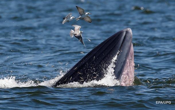 Японское судно столкнулось с китом: есть пострадавшие