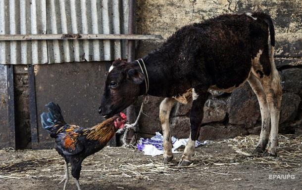 Украина открыла рынок для канадского мяса