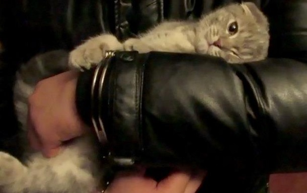 наркоторговец и кот