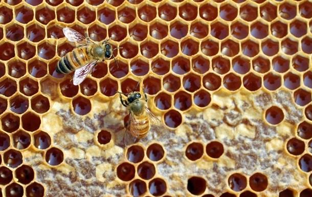 Европа считает украинский мед небезопасным