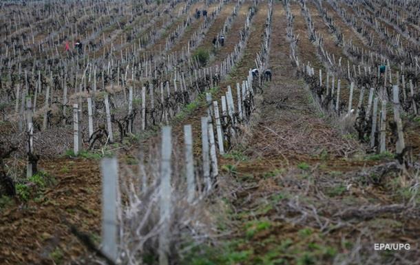 Минагрополитики посчитало прибыль от дерегуляции виноделия