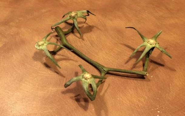 Ветку от томатов выдали за веганский беспилотник