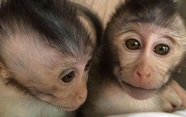 Ученые впервые создали  обезьян-аутистов