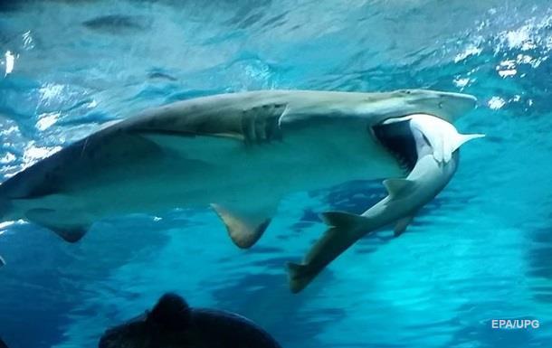 В Сеуле самка акулы съела самца