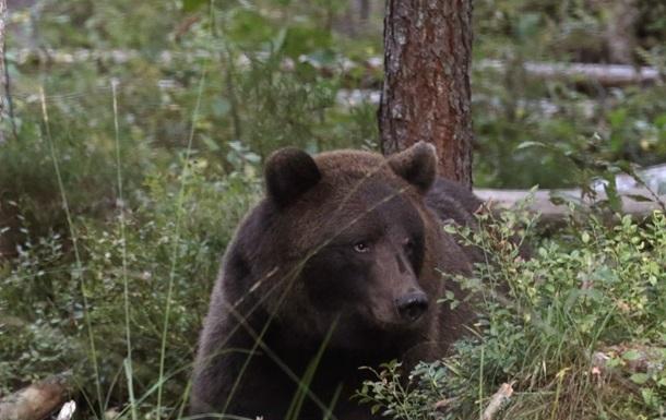 Микробы помогают медведям зимовать – ученые