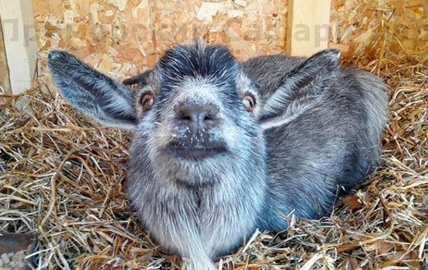 В Интернете появилось фото невесты козла Тимура