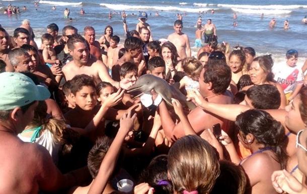 Селфи с туристами стало для дельфиненка смертельным