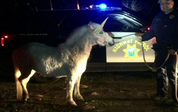 В Калифорнии полиция поймала на дороге единорога